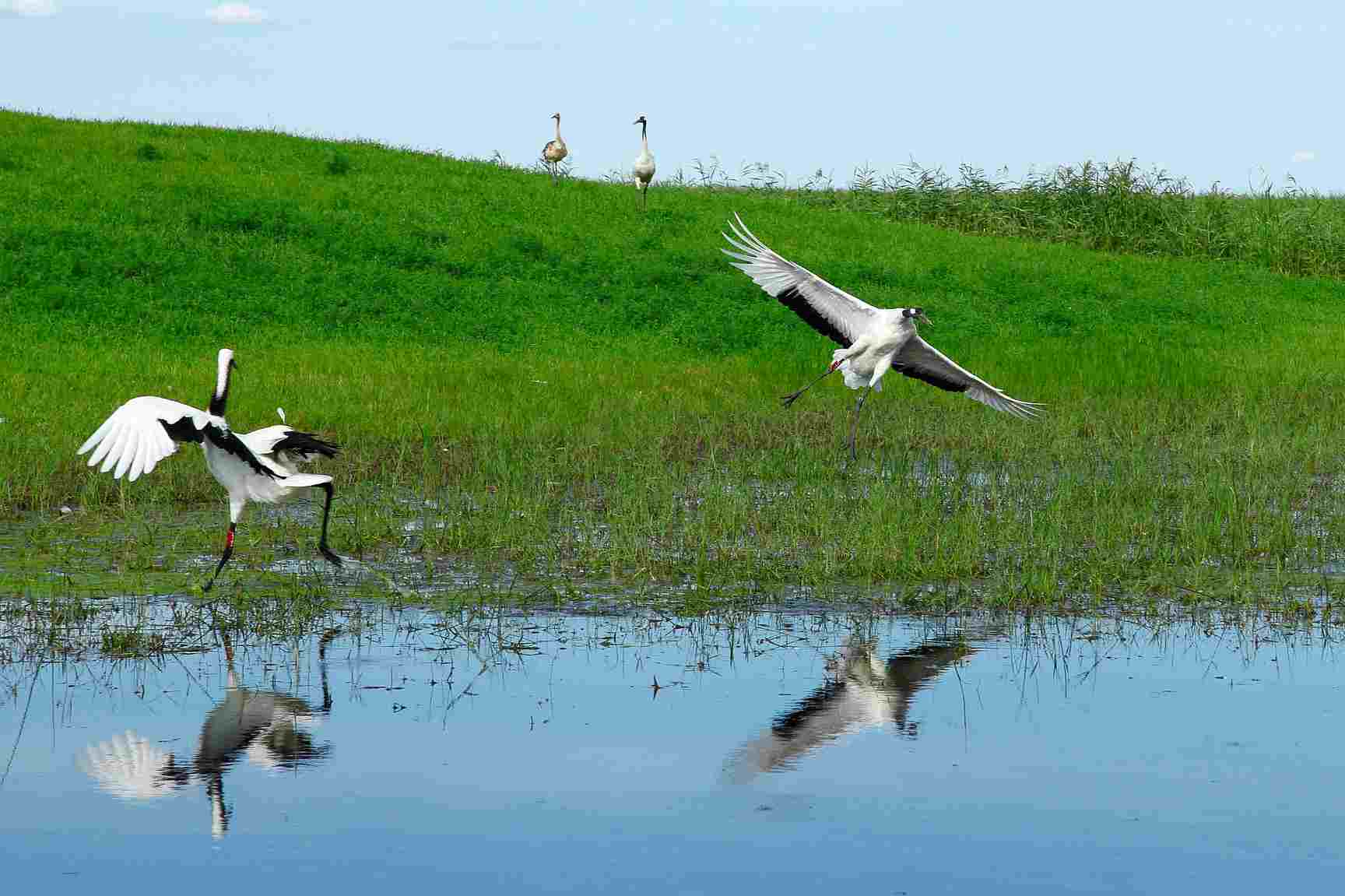 Koshi-Tappu-Wildlife-Reserve