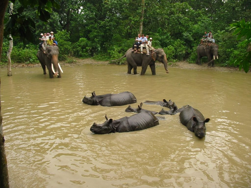 Tourism , elephant ride