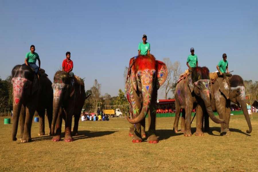Sauraha elephant festival