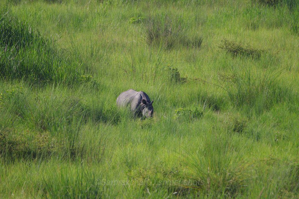 Rhino at Bardia National Park
