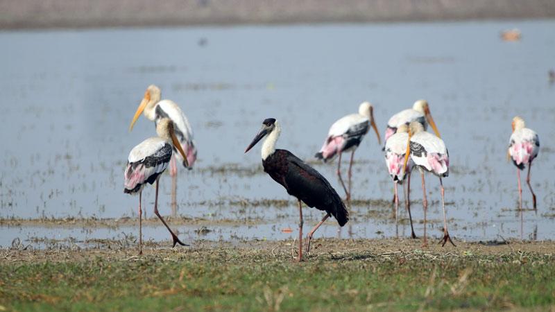 Bird Watching at Bardiya National Park