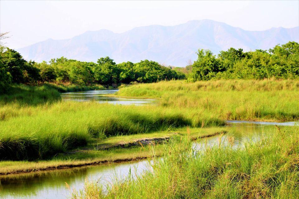 beautiful grassland - Bardiya National Park
