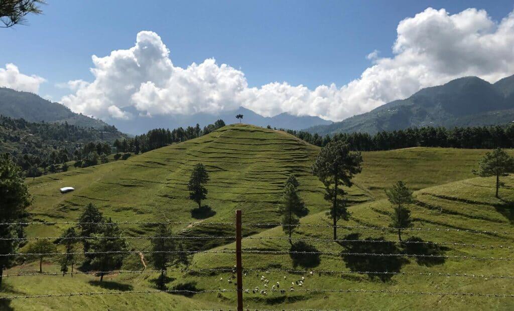 Goat Farming in Chitlang