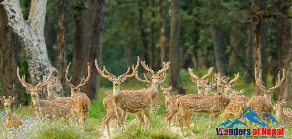 Suklaphanta National Parkark has the largest grassland in the Far Western