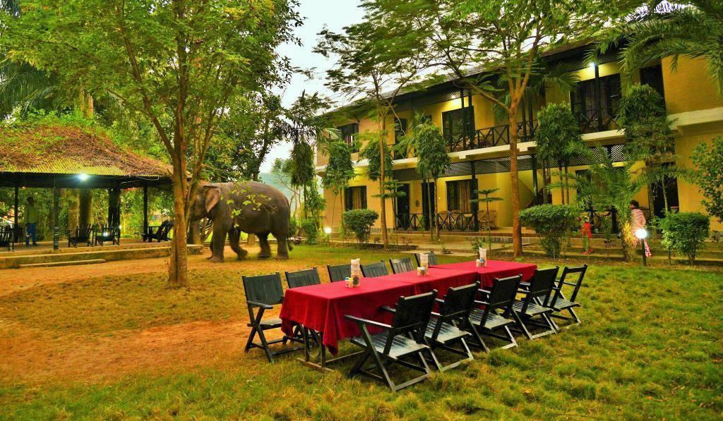 Hotels in Sauraha