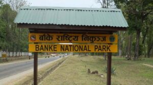 Banke National Park- Gift to the Earth