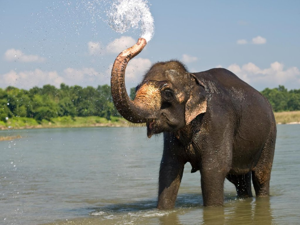 Tuberculosis Test started in Elephants