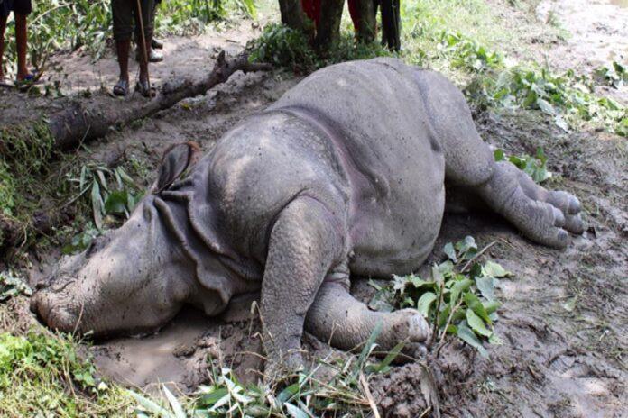 Rhinos Found dead