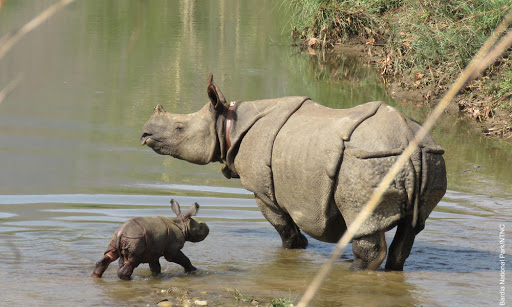 Rhino census scheduled from March 22