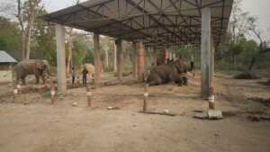 Elephant Safari at Banke National Park